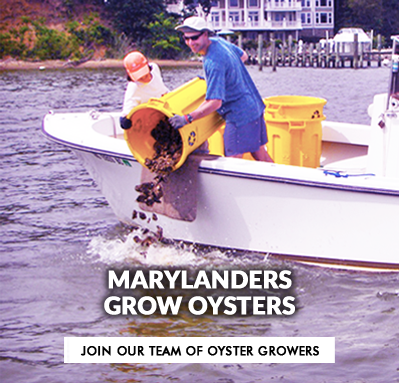 Marylanders Grow Oysters